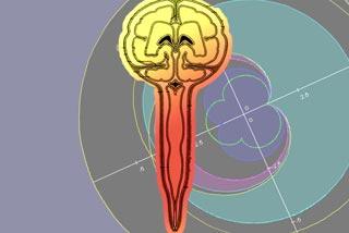 硬膜脳髄反射における検証と考察について